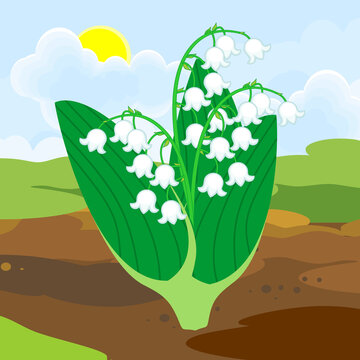 Blooming Lily of the valley plant with white flowers and green leaves growing from the ground on background of spring landscape