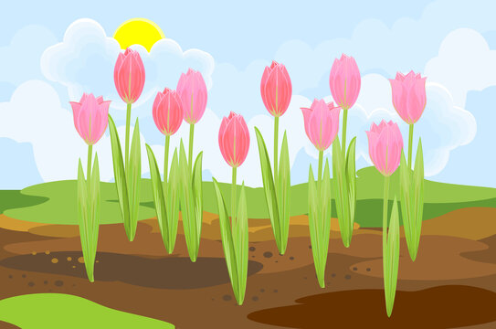Blooming tulip plants with pink flowers and green leaves growing from the ground on background of spring landscape