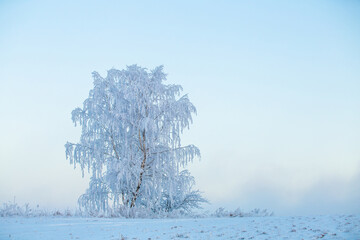 Christmas landscape with frosty tree