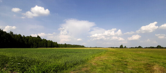 Green field meadow near the forest on the background of clear blue sky with white clouds Real image