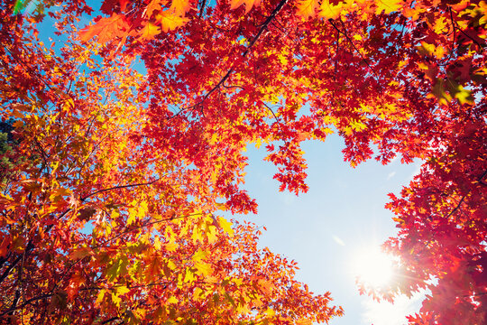 Multi colored autumn tree leaves on sunny sky background