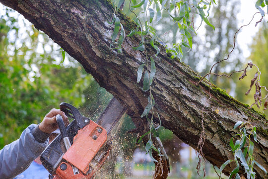 Man pruning tree branches work in the city utilities after damaged trees after a storm
