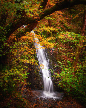 Tranquil autumn woodland scene.Tom Gill waterfall in Lake District, Cumbria,UK.Cascade in forest.Nature background.Pristine environment.