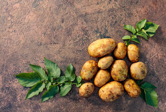 Raw  potato with green leaves on a brown background.