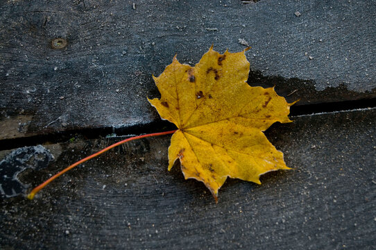 gefrorenes Blatt auf Holz