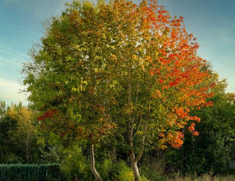 Baum mit beginnender Herbstfärbung