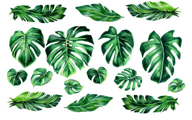 Set of tropical leaves. Jungle botanical watercolor illustrations, floral elements. Collection of monstera leaves, banana isolated on a white background. Beautiful illustration for textiles.