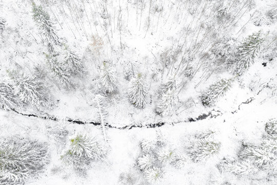 First snow forest view