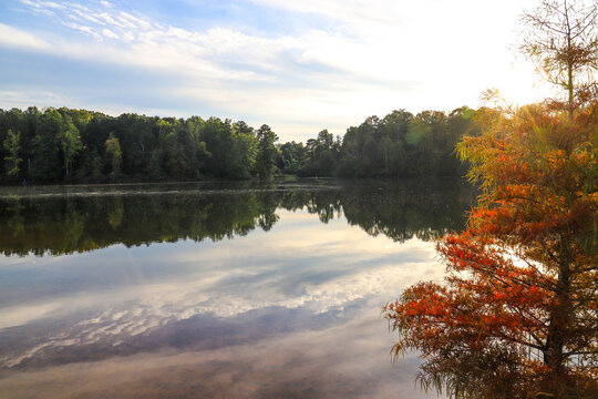 gorgeous autumn landscape with lush green and autumn colored trees reflecting off the lake with blue sky and clouds at Rhodes Jordan Park at Lawrenceville Lake in Lawrenceville, Georgia
