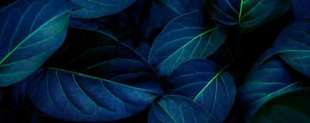 Wall Mural - closeup tropical dark green leaf background. Flat lay, fresh wallpaper banner concept