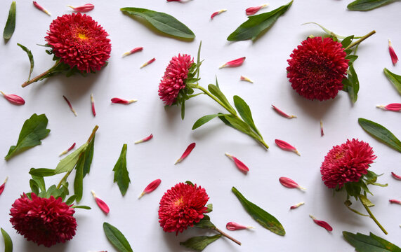 Floral pattern of a red flowers and green leaves. Beautiful natural arrangement. Top view, flat lay