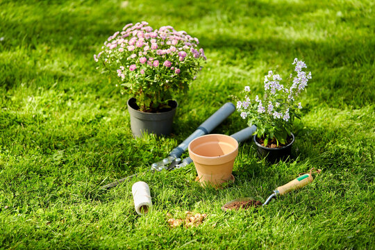 gardening and planting concept - garden tools, pots and flowers on grass at summer