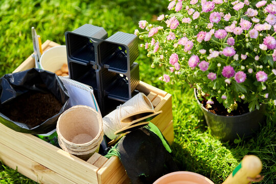 gardening and planting concept - garden tools in wooden box at summer