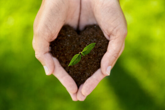 gardening, environment and nature concept - cupped hands holding plant growing in handful of soil at summer garden