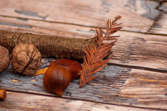 Autumn vibes: chestnuts, walnuts, dried leaves and cinnamon