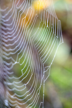 Spiders webiders web glistening with water droplets from the dew