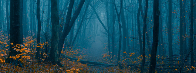 Mysterious pathway. Footpath in the dark, foggy, autumnal, misty forest with high trees. Arch through autumnal forest with yellow leaves. Wide angle panoramic landscape.