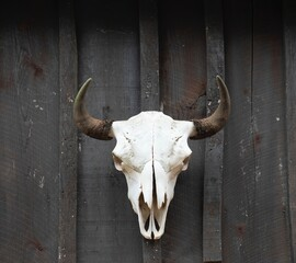 Bison skull with horn displayed on a weathered wood barn wall.