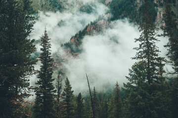 Atmospheric ghostly dark forest in dense fog among big rocks. Gloomy misty scenery with rocky mountain behind coniferous trees in low clouds. Alpine landscape at early morning. Hipster, vintage tones.