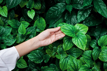 Wall Mural - closeup nature view of tropical leaf and hand background, dark tone concept