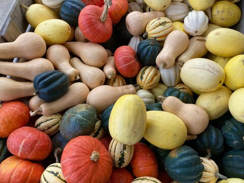 pumpkins and squash for sale at the market
