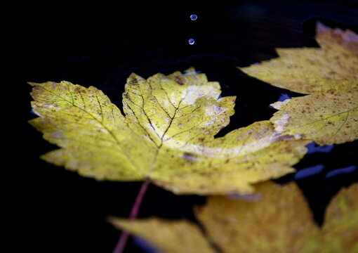 Water drops fall into a basin with yellow autumn foliage at the Zentralfriedhof cemetery in Vienna