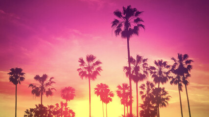 Palm trees. Summer. Tropical sunset