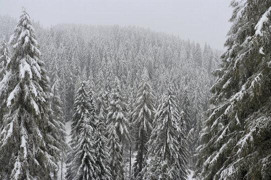 Winterwonderland, Sextner Dolomiten