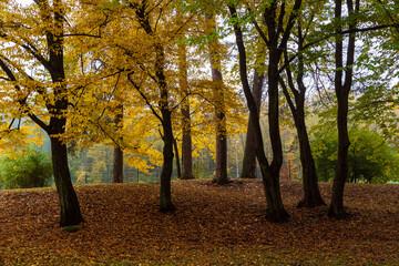 Fototapeta Park Konstytucji 3 Maja w Białymstoku, Jesień w parku Zwierzynieckim, Białystok, Podlasie