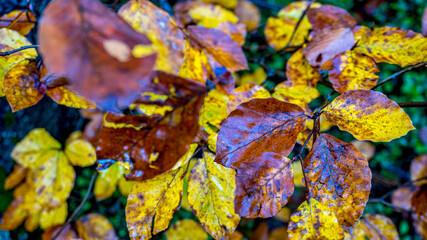 Kolory jesieni, październik w lesie. Beskid Śląski, Polska