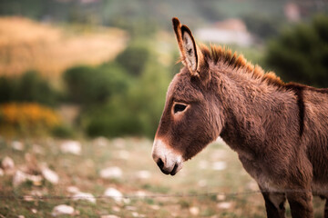 Close-up portrait of a young cute donkey in a field on a warm summer day