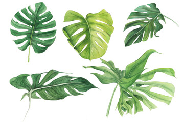 Tropical leaves collection, watercolor isolated elements on the white background, exotic botany plants palm leaves