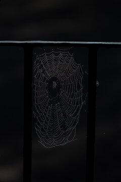 Spinnweben mit Tautropfen am Morgen