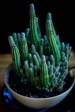 close up suculent in plantinng pot