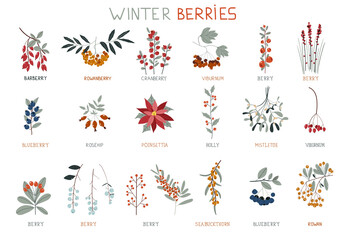 Winter berries. Perfect for winter decorations. Design elements. Collection of Vintage Merry Christmas And Happy New Year flowers. Christmas floral collection with winter decorative plants.