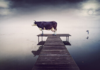 cow on the pier at the evening.