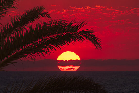 Vacation caribbean background of summer beach with palm trees and red sunset