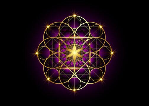 Seed of life symbol Sacred Geometry.  Geometric mystic mandala of alchemy esoteric Flower of Life. Gold luxury design, vector divine meditative amulet isolated on black and purple background