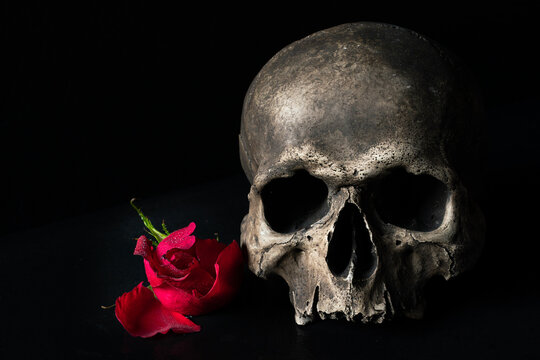Human skull with rose resting on ancient books