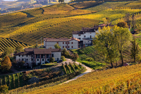 Rural houses and autumnal vineyards in Italy.