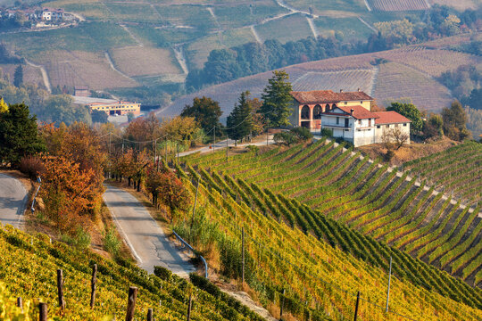 Autumnal vineyards on the hills of Langhe in Italy.