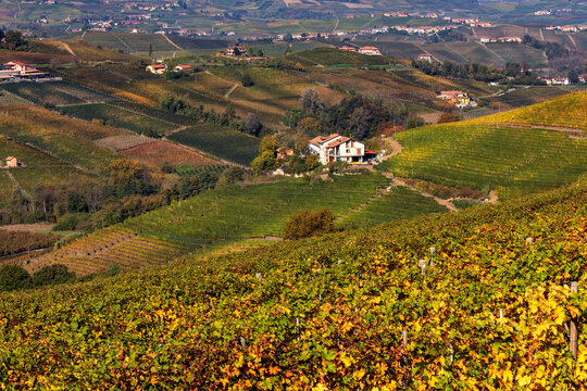 Colorful vineyards on the hills of Langhe in Italy.