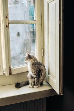 Cute grey cat at home near window