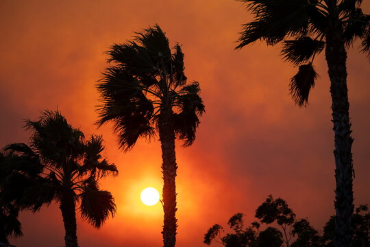 Strong winds blow smoke from the Silverado Fire past palm trees near Lake Forest