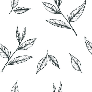Vector illustration seamless pattern with simple hand-drawn tea leaves. Design for fabric, stationery or wrapping paper for tea, matcha, packaging, label