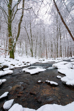water stream in the winter forest. trees and shore covered in snow