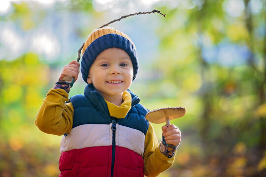 Cute toddler child, boy, holding mushroom in forest, musroom picking