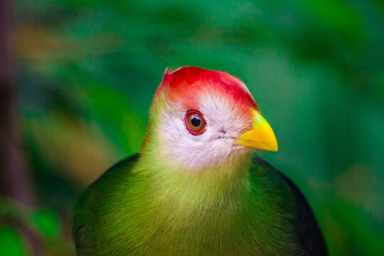Zoo Wildnis Paradiesvogel bunt Vogel Close Up