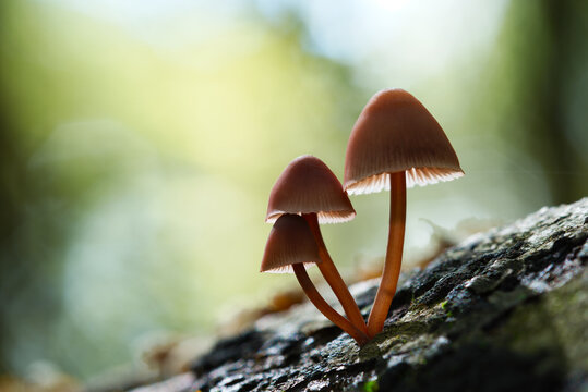 Mushrooms growing out of a tree trunk.