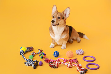 Cute dog with different pet accessories on color background